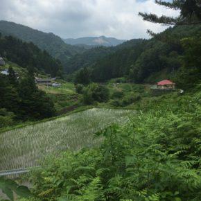 かみこやの周辺の里山 satoyama